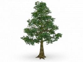 Bhutan cypress tree 3d model preview