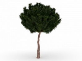 White pine tree 3d preview