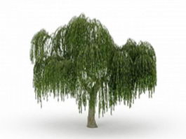 Large weeping willow tree 3d model preview