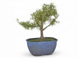 Bonsai tree in blue pot 3d preview