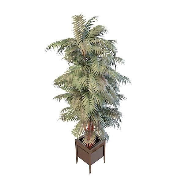 Paradise palm silk tree in pot 3d rendering