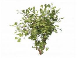 Ginkgo Biloba Maidenhair tree 3d model preview
