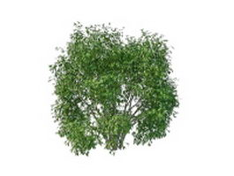 Large evergreen shrubs 3d model preview