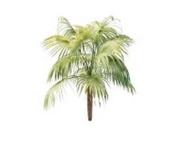 Pritchardia pacifica fan palm 3d model preview