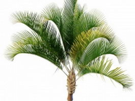 Windowpane Coconut 3d model preview