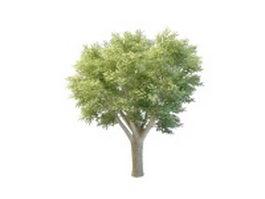Big oak tree 3d model preview