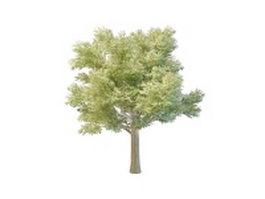 Beautiful big tree landscape 3d model preview