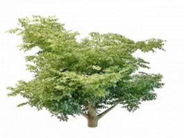 Variegated leaf tree 3d preview