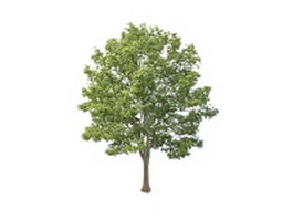 Britain lime tree 3d model preview