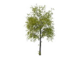 Ancient lime tree 3d model preview