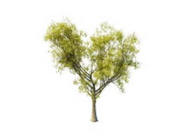 Sallow tree 3d model preview