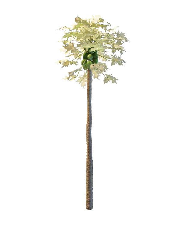 Papaya tree with fruit 3d rendering