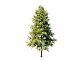 Ornamental scots pine 3d model preview