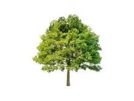 Front yard tree 3d model preview