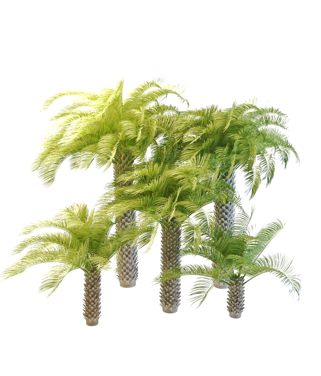 Cabbage palmetto ornamental palm trees 3d rendering