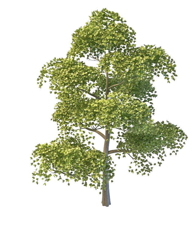 Chinese necklace poplar tree 3d rendering