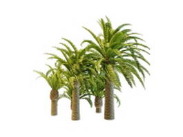 Varieties of pineapple palm trees 3d model preview