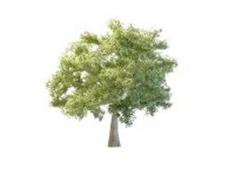 Quaking aspen tree 3d preview