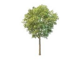 Garden peach tree 3d model preview
