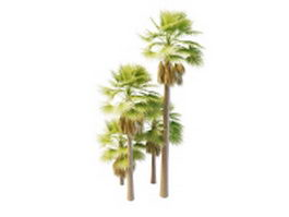 Australia palm trees 3d model preview