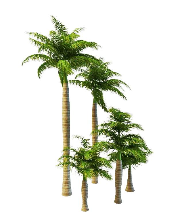 Varieties of royal palms 3d rendering