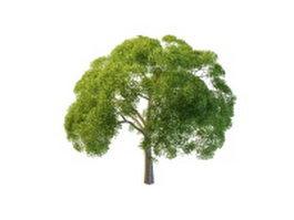 Willow oak tree 3d model preview