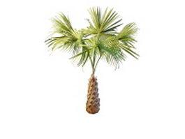 Copernicia palm tree 3d model preview