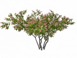 Pink blooming lilac 3d model preview