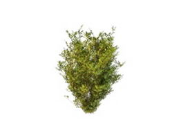 Dwarf ornamental evergreens 3d model preview
