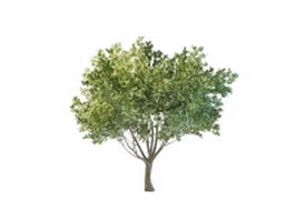 Backyard tree landscaping 3d model preview