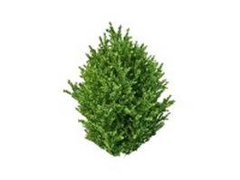 Ornamental shrubs for landscaping 3d model preview