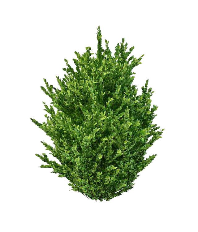 Ornamental shrubs for landscaping 3d rendering