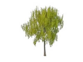 Spring willow tree 3d model preview