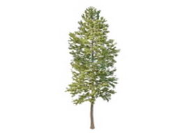 Norway pine tree 3d model preview