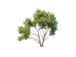 Ornamental peach tree 3d model preview