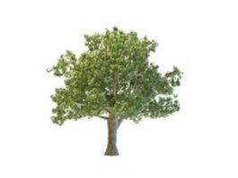 Oregon white oak tree 3d preview