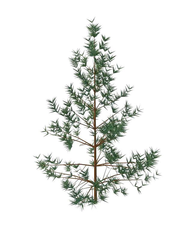 Salix leaf shrub 3d rendering