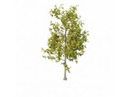 Old aspen tree 3d model preview