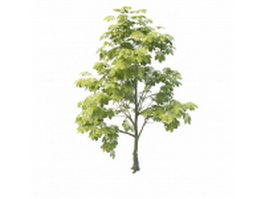 Small chestnut tree 3d preview