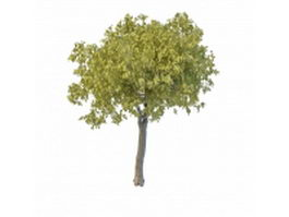Broad leaf willow tree 3d model preview