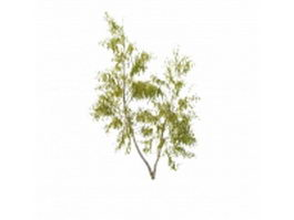 California birch tree 3d model preview