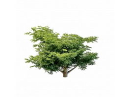 Variegated dogwood tree 3d model preview