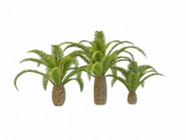 Pygmy date palm trees 3d model preview