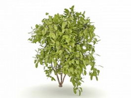 Evergreen bushes for landscaping 3d preview