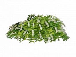 Flowering landscaping shrubs 3d model preview