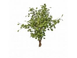 Evergreen Holly shrubs 3d preview