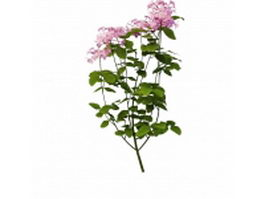 Purple flowering plant for landscaping 3d preview