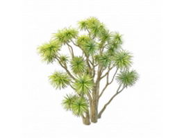 Ornamental cabbage tree 3d preview