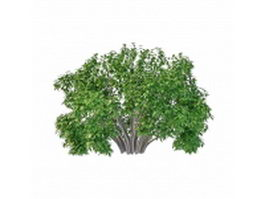 Willow bushes shrubs 3d preview