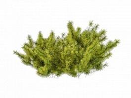 Small coniferous shrubs 3d preview